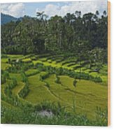 Rice Fields In Agricultural Bali Wood Print