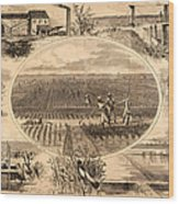 Rice Plantation, 1866 Wood Print