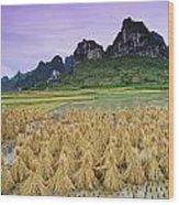 Rice, Yangshuo, Guangxi, China Wood Print