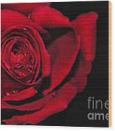 Rich Red Rose Wood Print