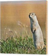 Richardson's Ground Squirrel Wood Print