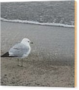 Ring-billed Gull Wood Print