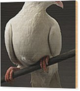 Ring-necked Dove Wood Print
