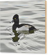 Ring Necked Duck  Wood Print