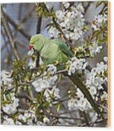 Ring-necked Parakeet Wood Print