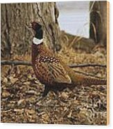 Ring-necked Pheasant Wood Print