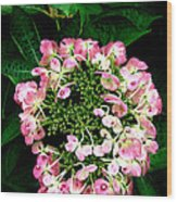 Ring Of Pink Wood Print