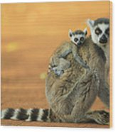 Ring-tailed Lemur Mother And Baby Wood Print