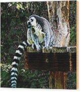Ring-tailed Lemur Wood Print