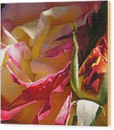 Rio Samba Rose And Bud Wood Print