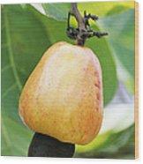 Ripe Cashew Nut Wood Print