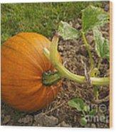 Ripe Pumpkin Wood Print