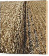 Ripened Wheat And Stubble In Saskatchewan Field Wood Print
