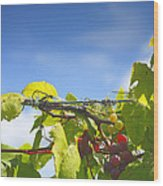 Ripening On The Vines Wood Print by Steven Ainsworth