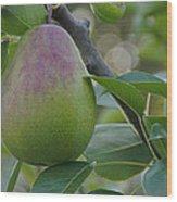 Ripening Pear In Tree Wood Print