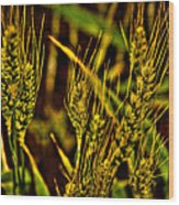 Ripening Wheat Wood Print