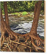 River And Roots Wood Print