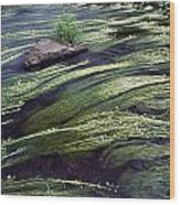 River Bandon, County Cork, Ireland Wood Print
