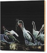 River Murray Pelicans Wood Print