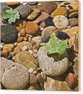 River Stones Wood Print by Steve Gadomski