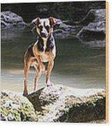 Riverdog Wood Print