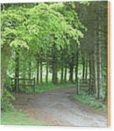 Road Into The Woods Wood Print