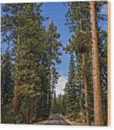 Road Through Lassen Forest Wood Print