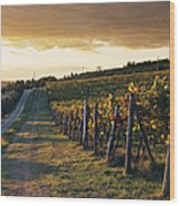 Road Through Vineyard Wood Print by Jeremy Woodhouse