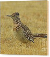Roadrunner Hen Wood Print