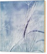 Roadside Blues Wood Print by Priska Wettstein