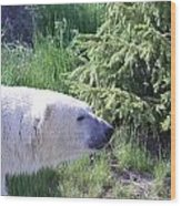 Roaming Polar Bear Wood Print