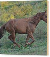 Roan At Up Hill Run  - C0083c Wood Print