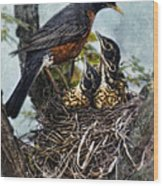 Robin And Babies In Nest Wood Print