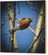 Robin Dives Into A Budding Spring Wood Print