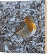 Robin On A Frosty Morning Wood Print