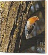 Robin On Tree Wood Print