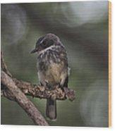 Robin Top-End Australia Wood Print