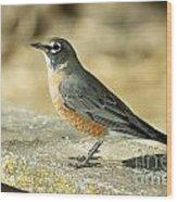 Robins Wood Print