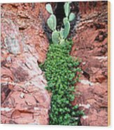 Rock And Cactus Wood Print by Barry Shaffer