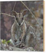 Rock Wallaby V2 Wood Print