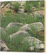 Rocks And Grass At Amidon Conservation Area Missouri Wood Print