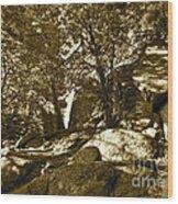 Rocks And Trees 1 Sepia Wood Print