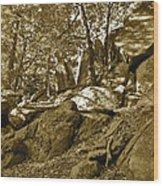 Rocks And Trees 2 Sepia Wood Print