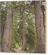 Rocky Mountain Forest Walk Wood Print