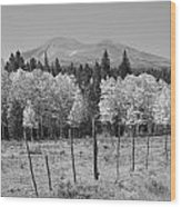Rocky Mountain High Country Autumn Fall Foliage Scenic View Bw Wood Print