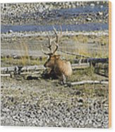 Rocky Mountains Elk Wood Print