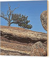 Rocky Tree Wood Print
