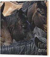 Rodeo Bucking Stock Wood Print