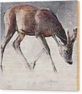 Roe Buck - Winter Wood Print by Mark Adlington
