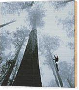 Roman Dial Preforms An Ecological Wood Print